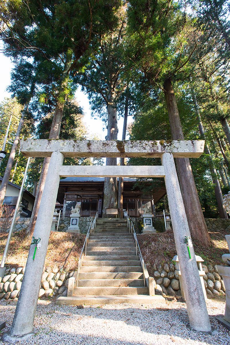 八幡神社スギ・ヒノキ合体